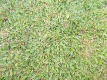 Bakgrund, modell och textur för fält för grönt gräs Arkivbild