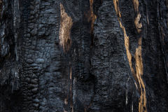 Bakgrund närbild av bränt trä Bränt till kol träd, bränd wood textur fotografering för bildbyråer