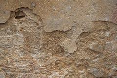 Bakgrund och textur av busen och bröt den bruna cementväggen Royaltyfria Bilder