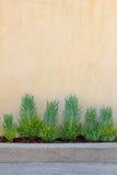 bakgrund planterar väggen Fotografering för Bildbyråer