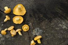 bakgrund plocka svamp trä Fotografering för Bildbyråer