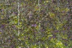 bakgrund pressande seaweed Royaltyfri Bild