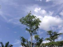 bakgrund räknade vektorn för fjädern för naturen för morgonen för green för friskhet för lövverk för gryningdaggdroppar den runda Arkivfoton
