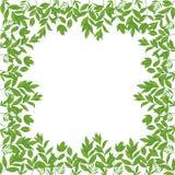 Bakgrund ram av gröna sidor Royaltyfria Bilder