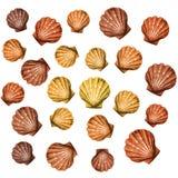 bakgrund shells vektorn Royaltyfri Bild