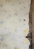 bakgrund skadlig gammal vägg för hus royaltyfria foton