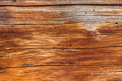 Bakgrund som är nära upp av cederträstamträ Royaltyfri Foto