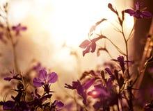 Bakgrund som göras av den violetta vildblomman Royaltyfri Fotografi