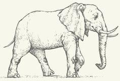 bakgrund som tecknar den blom- gräsvektorn Elefant Arkivfoton