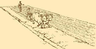 bakgrund som tecknar den blom- gräsvektorn Primitivt jordbruk Bönder behandlade fältet Royaltyfri Foto
