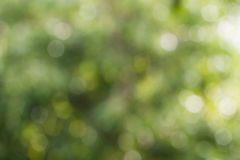 bakgrund suddighett grönt naturligt Fotografering för Bildbyråer