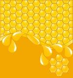 bakgrund tappar honungskakan vektor illustrationer
