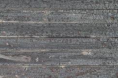 bakgrund teckent trä Royaltyfri Bild