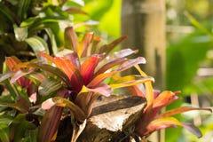 Bakgrund textur av en tropisk växt Tropikerna exotiska växter askfat arkivfoto