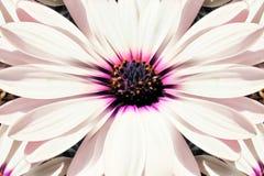 Bakgrund textur av slutet för vit blomma upp vektor illustrationer