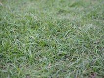 Bakgrund/textur för grönt gräs för Closeup Royaltyfria Foton