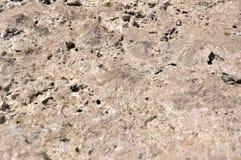 Bakgrund textur, kvarlevor av koraller Arkivbilder