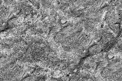 Bakgrund textur, kvarlevor av koraller Royaltyfri Bild