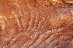 Bakgrund textur, kvarlevor av koraller Royaltyfria Foton