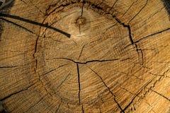 Bakgrund textur, skiva av trädstammen Arkivfoto