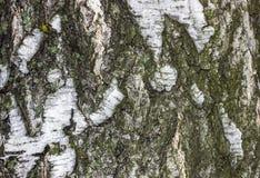 Bakgrund textur, trädskäll Royaltyfria Foton