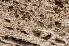 Bakgrund Texturen av nära övre för kalksten och för limefrukt Bildat av sedimentära stenar arkivfoto
