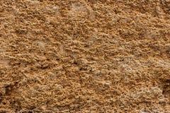 Bakgrund Texturen av nära övre för kalksten och för limefrukt Bildat av sedimentära stenar royaltyfri bild