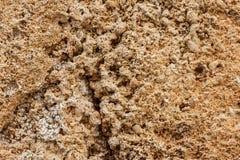 Bakgrund Texturen av nära övre för kalksten och för limefrukt Bildat av sedimentära stenar arkivbilder
