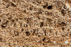 Bakgrund Texturen av nära övre för kalksten och för limefrukt Bildat av sedimentära stenar arkivfoton
