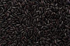 Förbjuden Rice Royaltyfri Foto