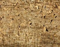 bakgrund texturerat trä Arkivbilder