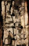 bakgrund texturerat trä Royaltyfri Foto