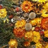 bakgrund torkade blommor Arkivbilder