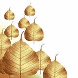 bakgrund torkat leafskelett Arkivbild