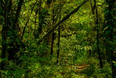 Bakgrund - tropisk skog royaltyfria foton