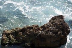 Bakgrund vaggar havet Arkivfoton