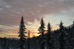 Bakgrund vinter, himmel, moln, rosa blå solnedgång, åt, skog, snö royaltyfri bild