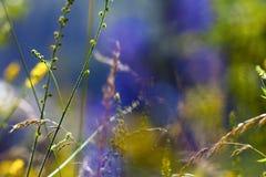 Bakgrunden av blommor Arkivfoto
