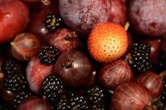 Bakgrunden av de trädgårdfrukterna och bären Royaltyfri Fotografi