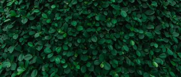 Bakgrunden av gräsplan lämnar den naturliga väggen arkivfoton