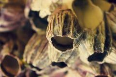 Bakgrunden av härliga havskoraller arkivbilder