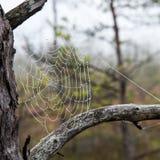 Bakgrunden för closeup för spindelrengöringsduk (spindelnät) Arkivfoton