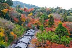 bakgrunden för lönn för härlig Momiji höst den färgrika på Otowa a Royaltyfria Foton