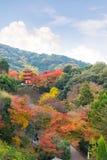 bakgrunden för lönn för härlig Momiji höst den färgrika på Otowa a Royaltyfri Foto
