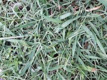 Bakgrunder av grönt gräs, modeller för grönt gräs och textur raindrop arkivfoto