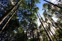 Bakgrunder av träd Arkivfoto