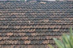 Bakgrunder 081 - bästa del av taket Arkivbilder