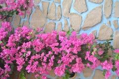 Bakgrunder 034 - blomma Beautifully trädet Arkivfoto