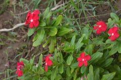 Bakgrunder 051 - blommande träd Fotografering för Bildbyråer