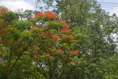 Bakgrunder 056 - blommande träd Arkivbild